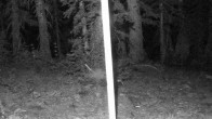 Snowbird - Snowcam