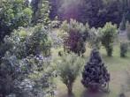 Archiv Foto Webcam Bayerischer Wald: Hotel Waldeck in Mitterdorf 08:00