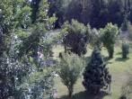 Archiv Foto Webcam Bayerischer Wald: Hotel Waldeck in Mitterdorf 10:00