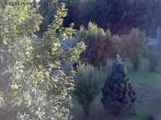 Archiv Foto Webcam Bayerischer Wald: Hotel Waldeck in Mitterdorf 12:00
