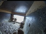 Archived image Webcam Aachen Cathedral: Falcons nest 02:00