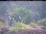 Archiv Foto Webcam Bayerischer Wald: Blick auf das Storchennest in Grafenau 04:00