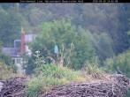 Archiv Foto Webcam Bayerischer Wald: Blick auf das Storchennest in Grafenau 08:00
