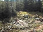 Archiv Foto Webcam Nationalpark Bayerischer Wald - Luderplatz 06:00