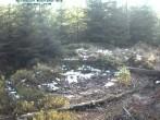 Archiv Foto Webcam Nationalpark Bayerischer Wald - Luderplatz 08:00