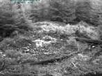 Archiv Foto Webcam Nationalpark Bayerischer Wald - Luderplatz 12:00