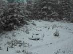 Archiv Foto Webcam Nationalpark Bayerischer Wald - Luderplatz 10:00