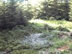 Archiv Foto Webcam Nationalpark Bayerischer Wald - Luderplatz 04:00