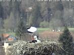 Archiv Foto Webcam Storchennest in Isny 08:00
