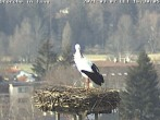 Archived image Webcam Isny – Stork's nest 10:00