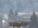 Archived image Webcam Isny – Stork's nest 12:00