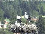 Archived image Webcam Isny – Stork's nest 04:00