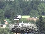 Archived image Webcam Isny – Stork's nest 06:00