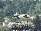 Archived image Webcam Isny – Stork's nest 08:00