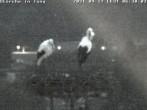 Archived image Webcam Isny – Stork's nest 00:00