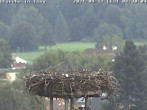 Archived image Webcam Isny – Stork's nest 02:00