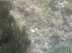 Archived image Webcam Winterberg: Magic carpet `Käppchen` 08:00