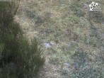 Archived image Webcam Winterberg: Magic carpet `Käppchen` 12:00