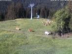 Archiv Foto Webcam Stuttenabfahrt 02:00