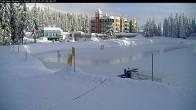 Archived image Webcam Brewer´s Pond Cam 04:00