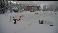 Archived image Webcam Brewer´s Pond Cam 08:00