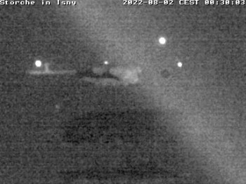 Storchennest in Isny