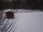 Webcam Bayerischer Wald